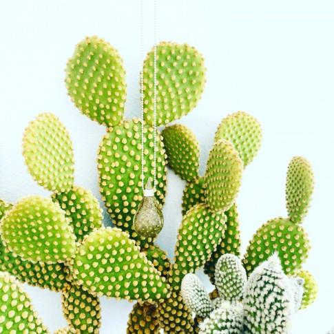 Gota cactus