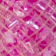 Dorada + rosa chicle