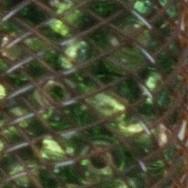 Marrón + verde
